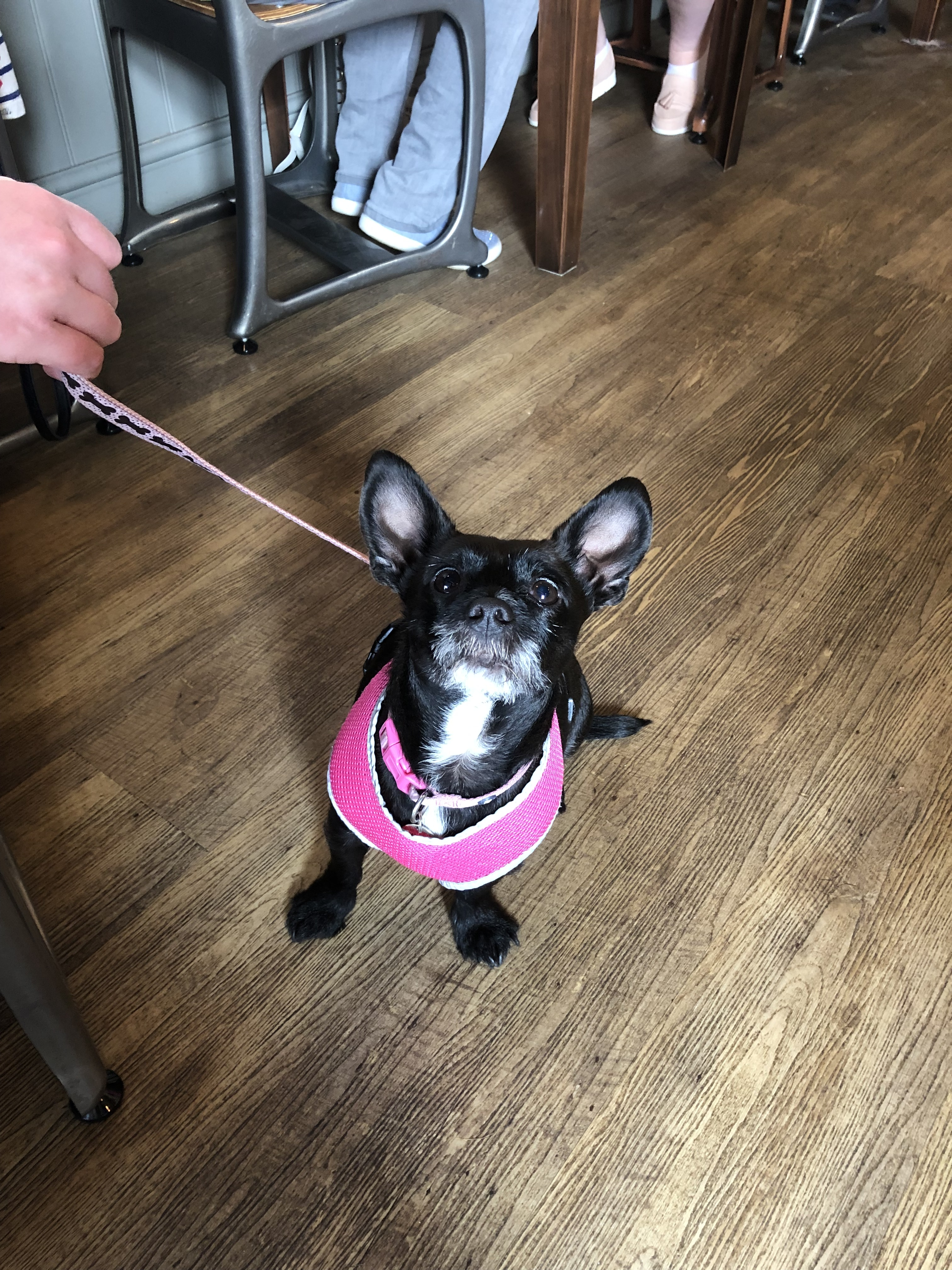 Tilly's first visit to Bean 47