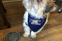Buster-on-his-first-birthday