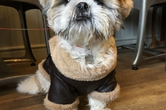 Buster-posing-in-his-leather-jacket-on-a-chilly-morning